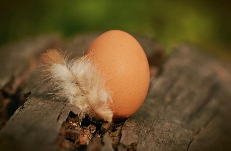 Jak sprawdzić świeżość jajka? Te i inne ciekawostki dotyczące jajek